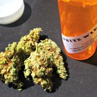 Marijuana is used by patients to treat several maladies, including pain associated with end-stage cancer.