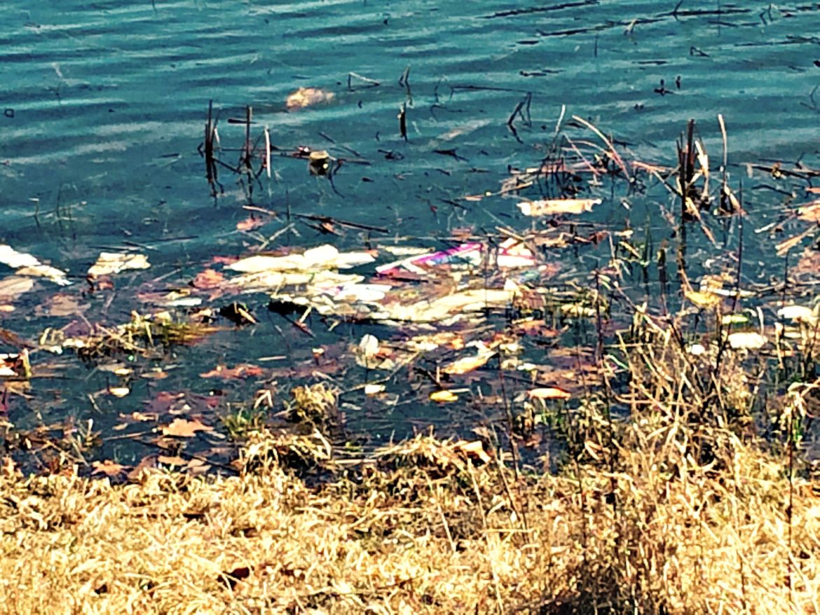 Trash floats among leaves and weeds at Bell Pond.
