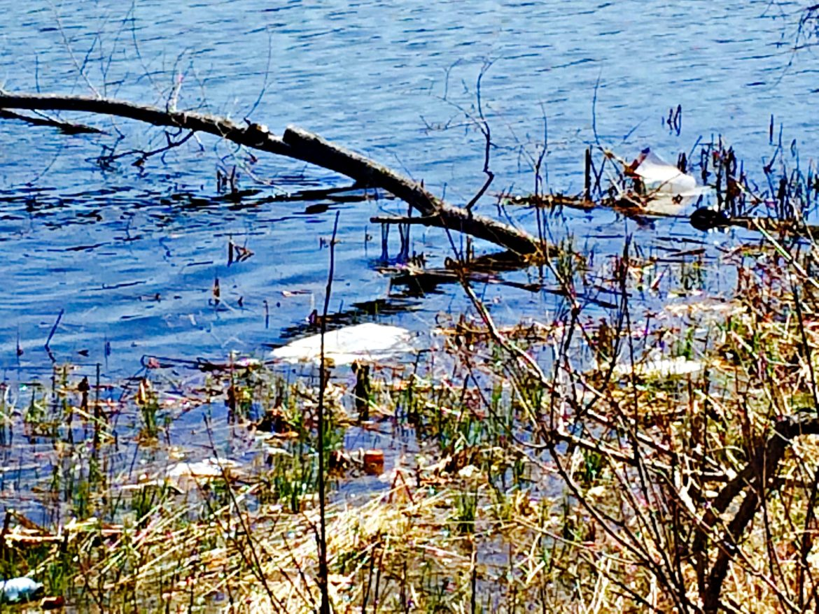 Trash along the shore of Bell Pond.