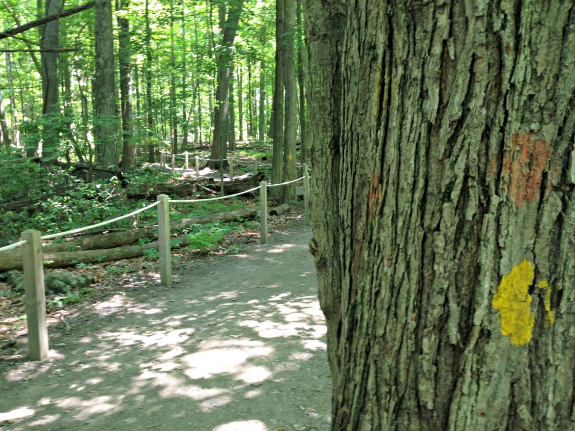Broad Meadow Brook Sensory Trail