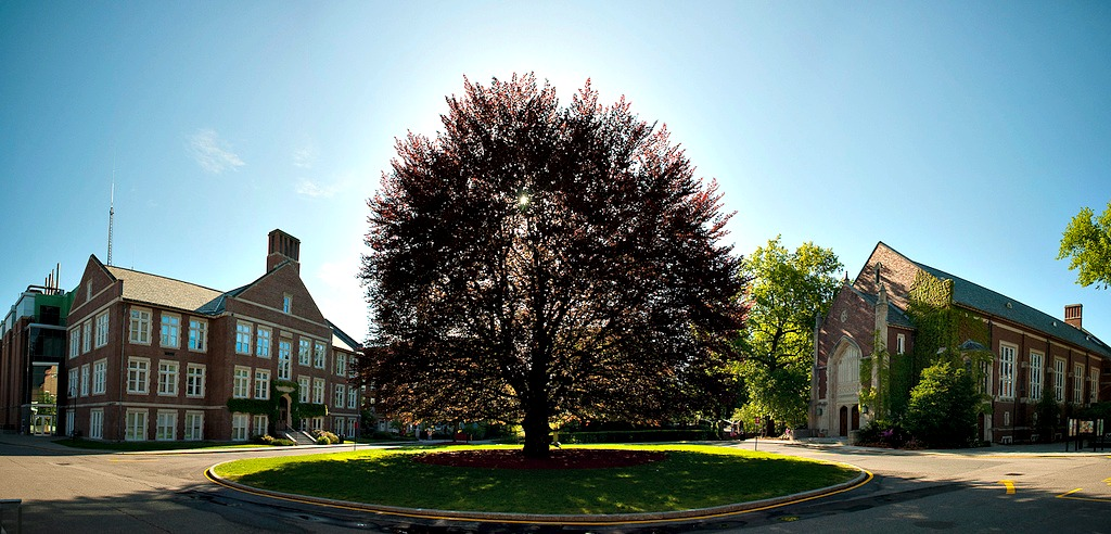 WPI's Beech Tree