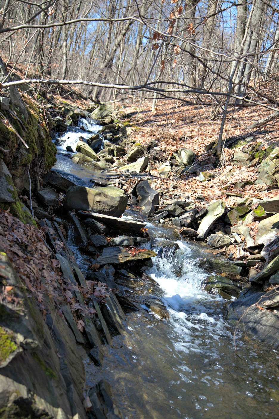 Coal Mine Brook