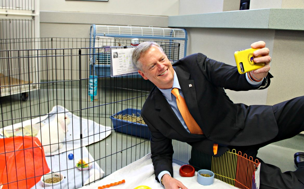 While on a visit to highlight new quarantine procedures for animals, Gov. Charlie Baker, a prolific selfie-taker, got down on the floor of the Animal Rescue League of Boston on Monday and attempted to take a picture with Nikki the albino rabbit.